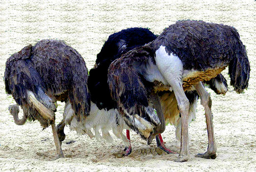 ostrich head in sand - rate hike without data